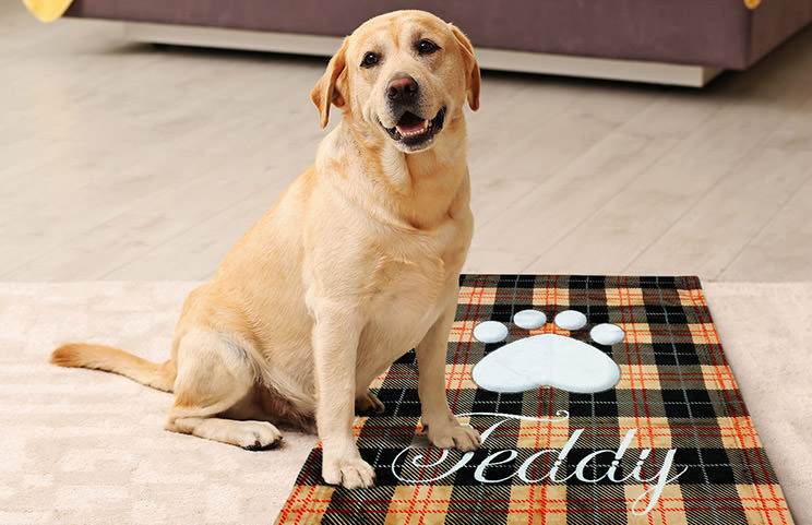 Labrador dog on custom dog name blanket with paw print design
