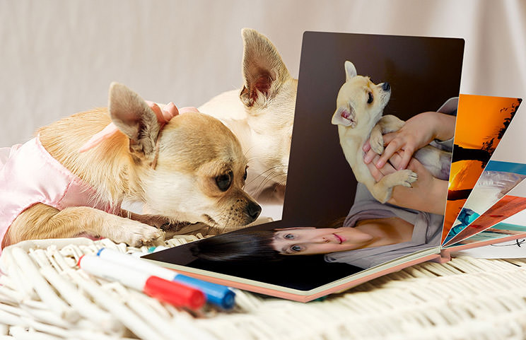 small dog looking at dog themed photo book with pink leather cover